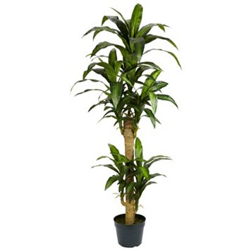nearly natural Silk 5-ft. Yucca Plant