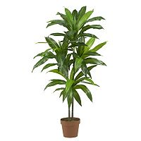nearly natural Silk 48 in Dracaena Plant