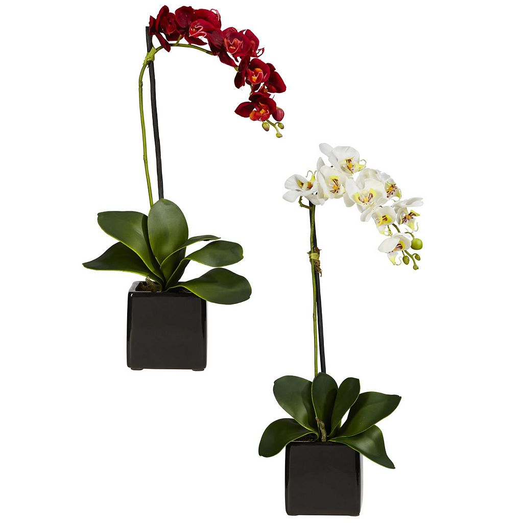 nearly natural 2-pc. Silk Phaleanopsis Orchid Floral Arrangement Set