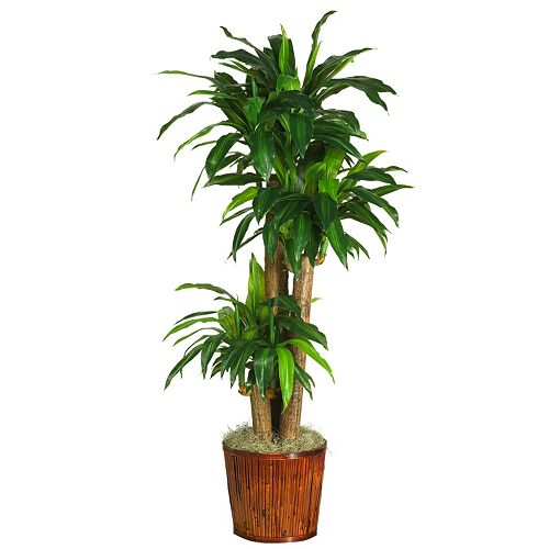 nearly natural 62-in. Real Touch Silk Dracena Plant