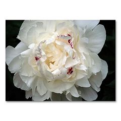 'Perfect Peony' Canvas Wall Art by Kurt Shaffer
