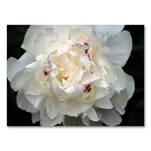 """Perfect Peony"" Canvas Wall Art by Kurt Shaffer"