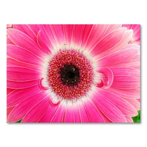Pink Gerber Canvas Wall Art by Kurt Shaffer