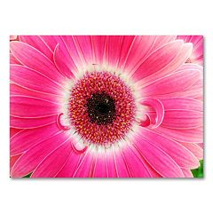 'Pink Gerber' 18'' x 24'' Canvas Wall Art by Kurt Shaffer