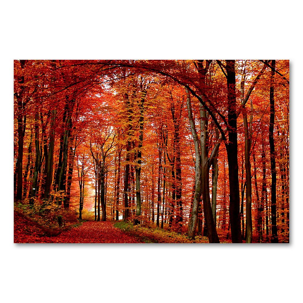 """""""The Red Way"""" 22"""" x 32"""" Canvas Wall Art by Philippe Sainte-Laudy"""