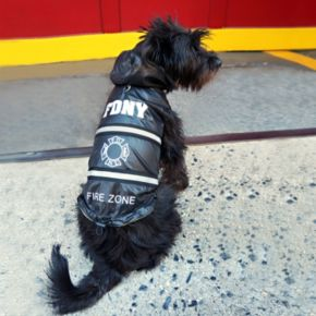 Royal Animals FDNY Fire Badge Dog Raincoat