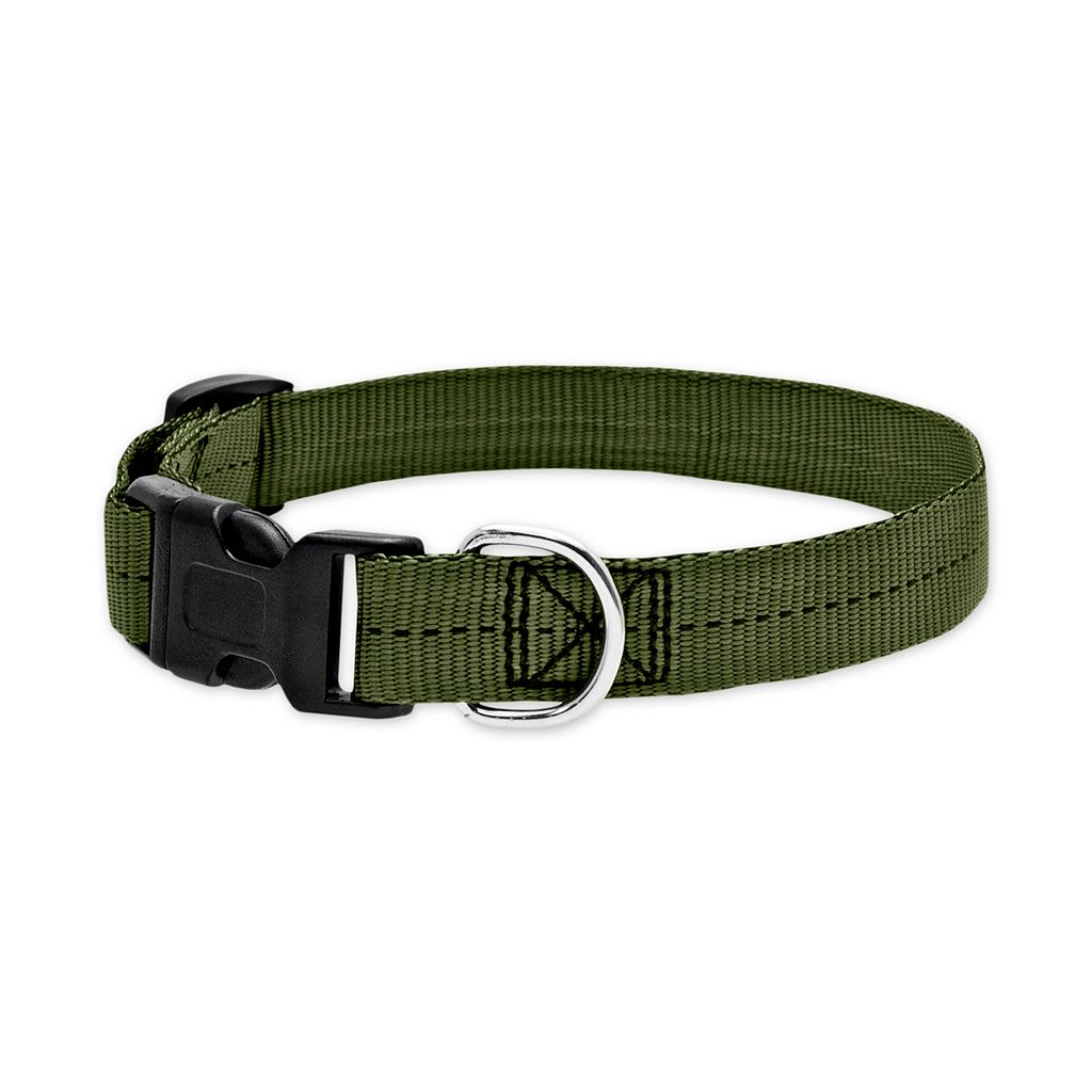 Ruffin' It Para Web Small Dog Collar