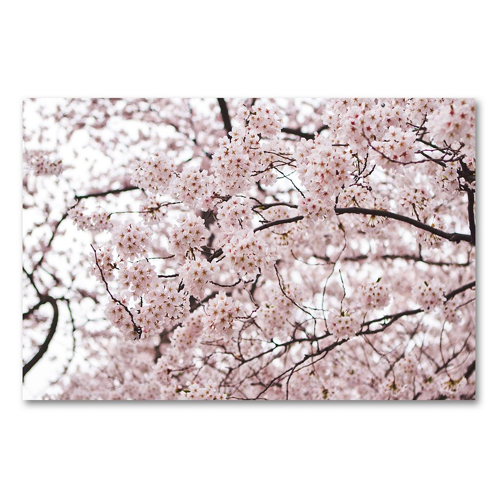 30'' x 47'' ''Cherry Blossoms'' Canvas Wall Art by Ariane Moshayedi