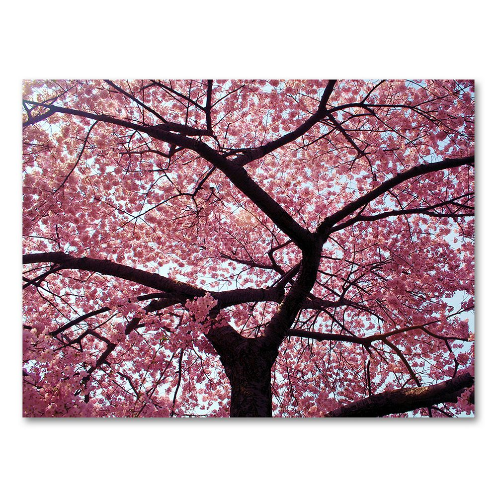 """Cherry Tree"" 18"" x 24"" Canvas Wall Art by CATeyes"