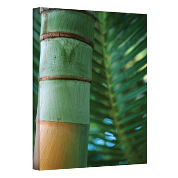 12'' x 18'' ''Bamboo & Fern'' Canvas Wall Art by Kathy Yates