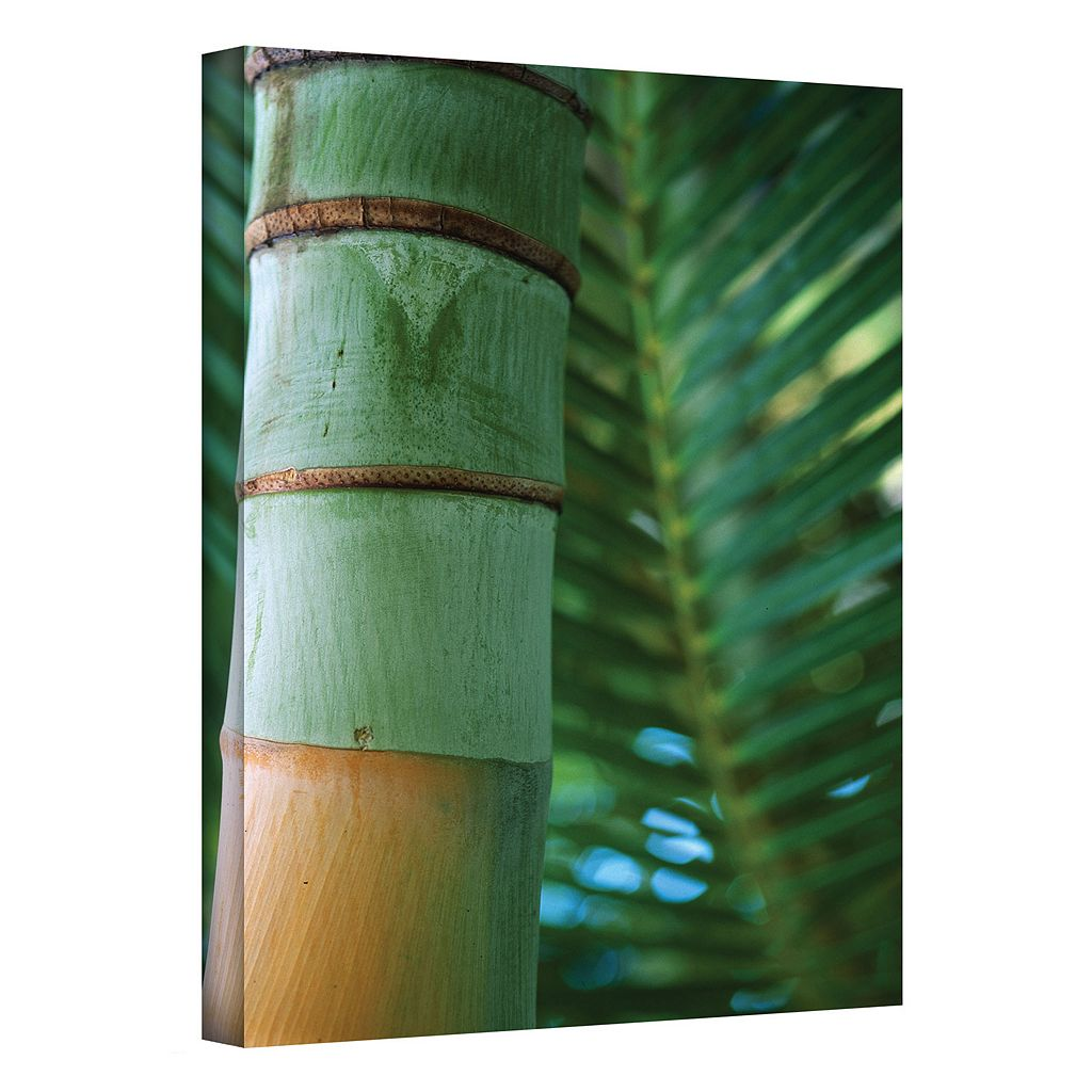 32'' x 48'' ''Bamboo & Fern'' Canvas Wall Art by Kathy Yates