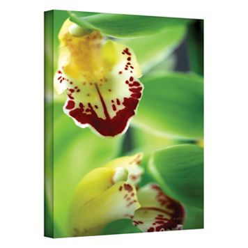 24'' x 36'' ''Cymbidium Sea Foam Emerald Orchid'' Canvas Wall Art by Kathy Yates
