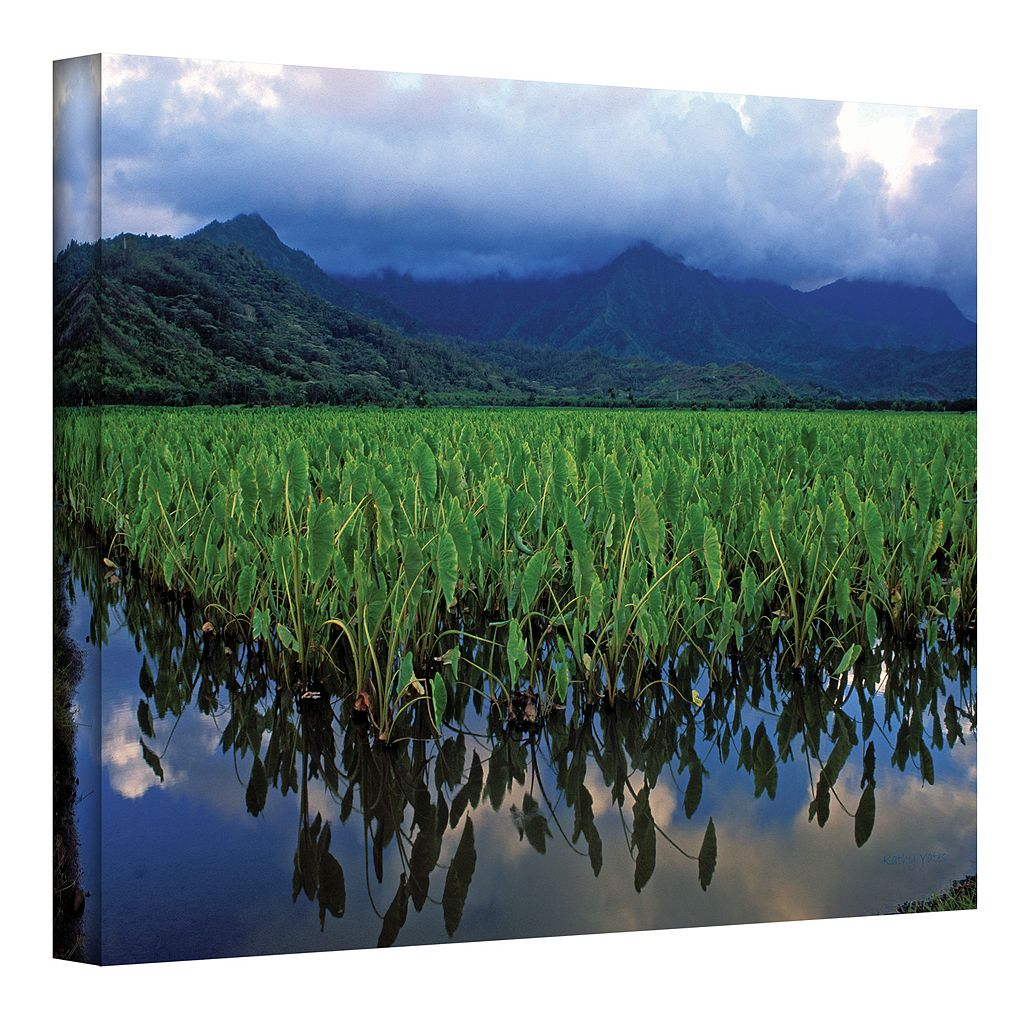 16'' x 24'' ''Kauai Taro Field'' Canvas Wall Art by Kathy Yates