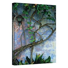 12'' x 18'' ''Vine & Wall'' Canvas Wall Art by Kathy Yates