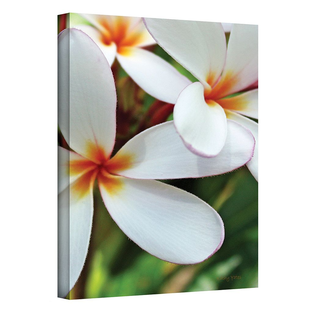 '24'' x 36'' 'White Plumeria'' Canvas Wall Art by Kathy Yates