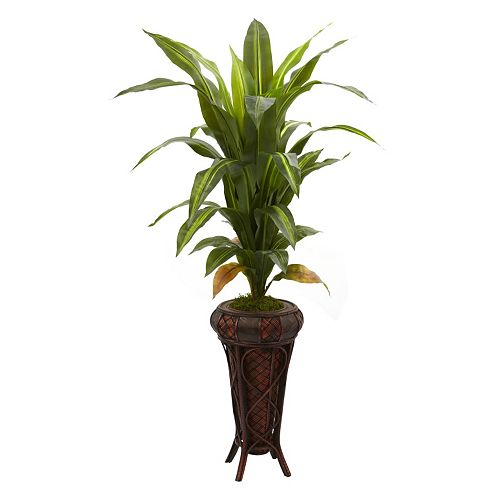 nearly natural Dracaena Plant