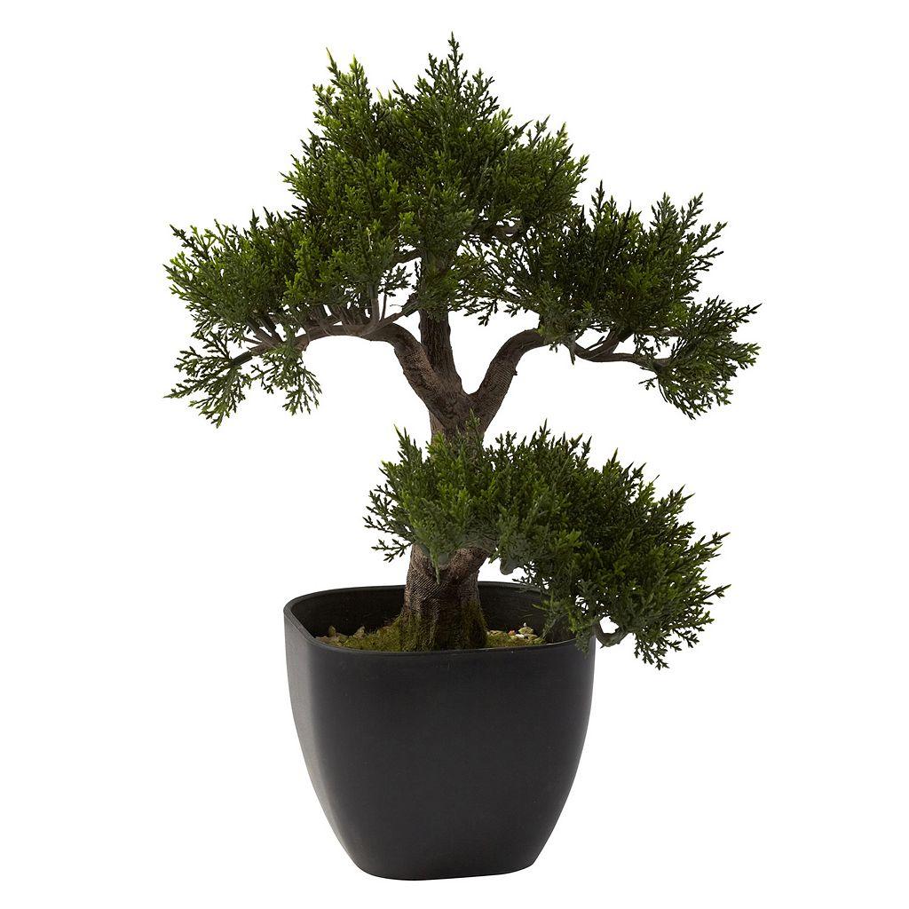nearly natural Cedar Bonsai