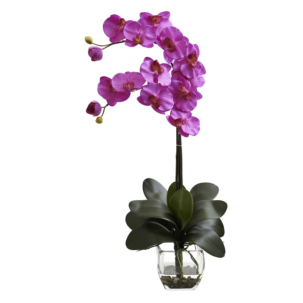 nearly natural Double Phalaenopsis Orchid Arrangement