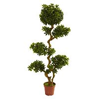 nearly natural 5-ft. Potted Pittispourm Tree - Indoor & Outdoor