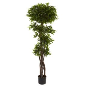 nearly natural 5-ft. Potted Ruscus Tree