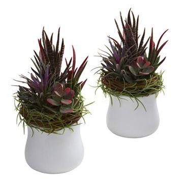 nearly natural 2-pc. Mixed Succulent Arrangement Set