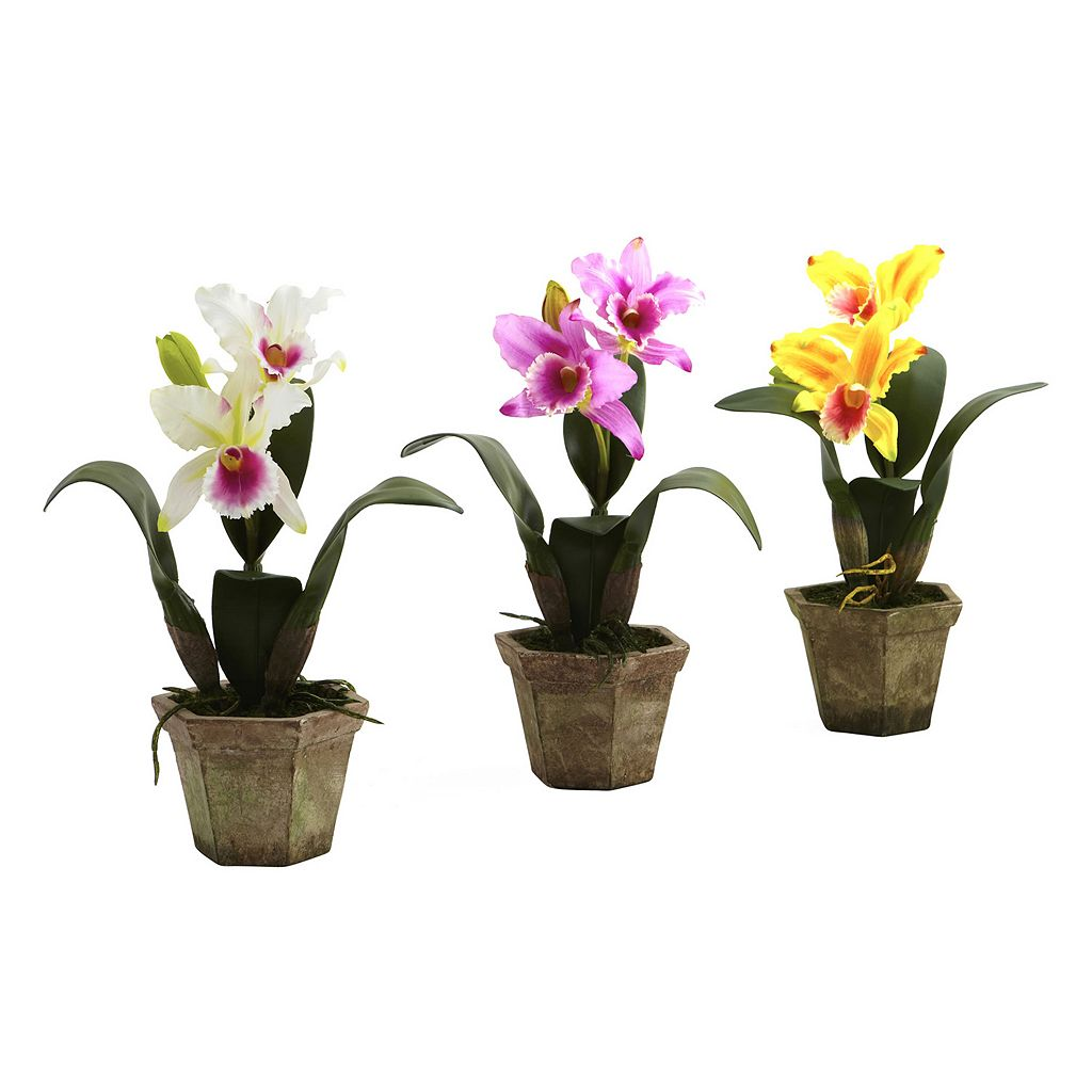 nearly natural 3-pc. Potted Cattelya Orchid Arrangement Set