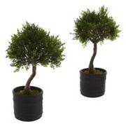 nearly natural 2 pc Cedar Bonsai Set