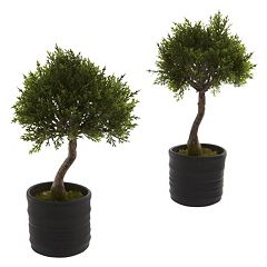 nearly natural 2-pc. Cedar Bonsai Set