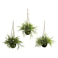 nearly natural 3 pc Ruscus, Sedum & Springeri Hanging Plant Basket Set