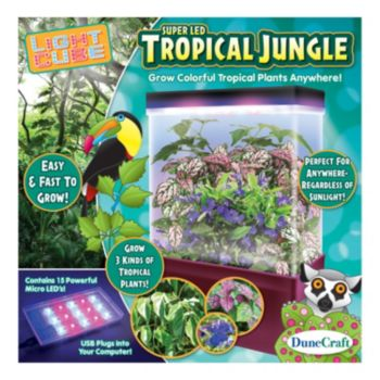 Tropical Jungle LED Light Cube Terrarium
