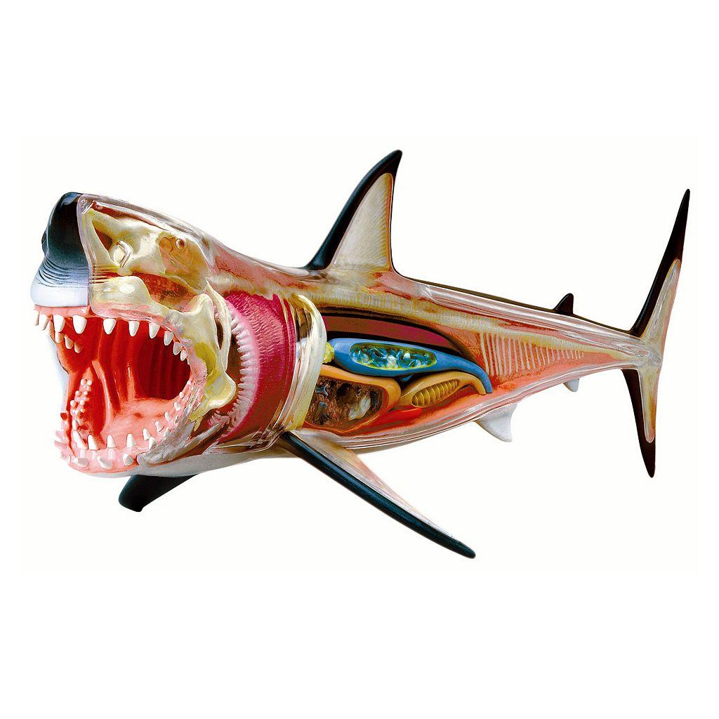 4D Vision Shark Model by 4D Master