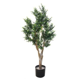 Navarro 41-in. Potted Ixora Chinese Tree - Indoor and Outdoor
