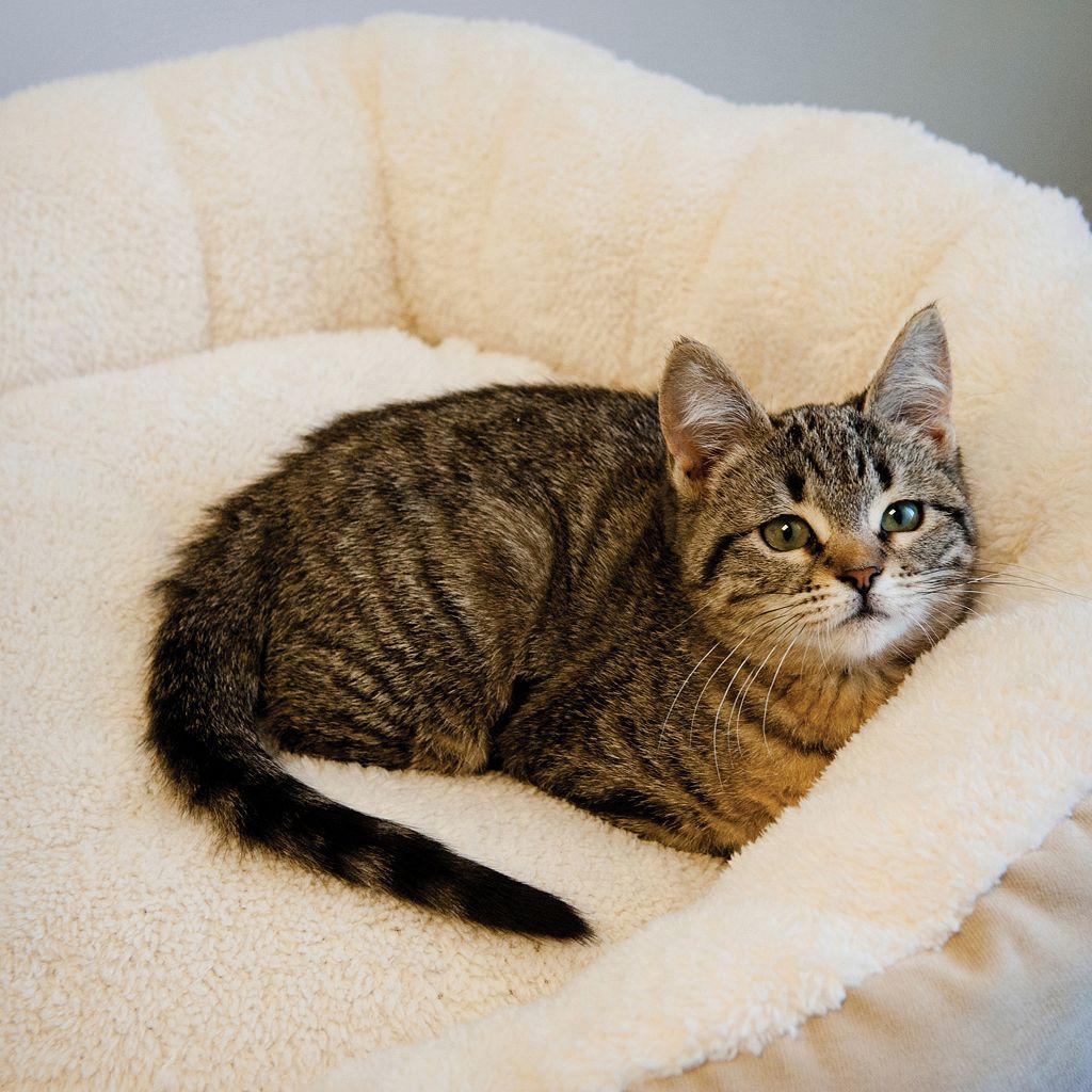 KandH Huggy Nest Small Pet Bed - 19'' x 22''