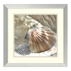 ''Coral Shell III'' Framed Wall Art