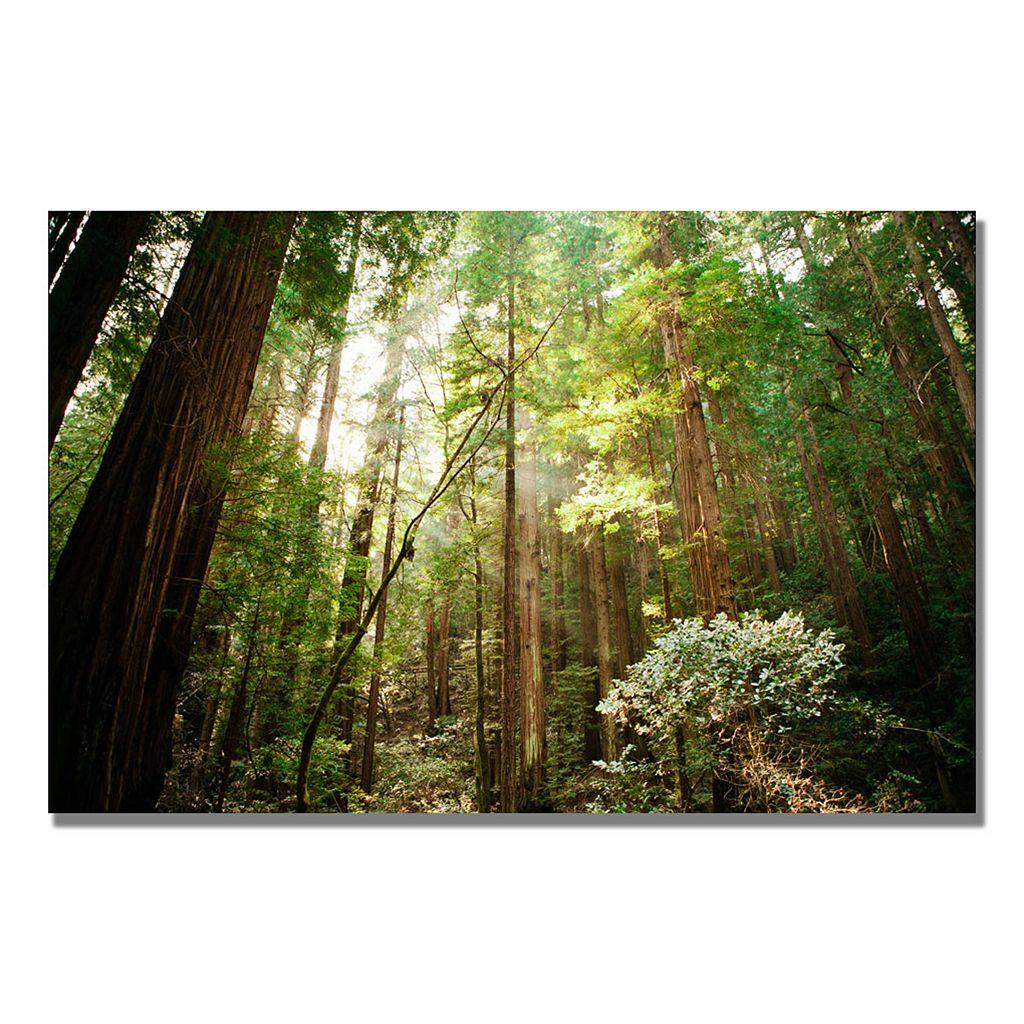 24'' x 16'' ''Muir Woods'' Canvas Wall Art
