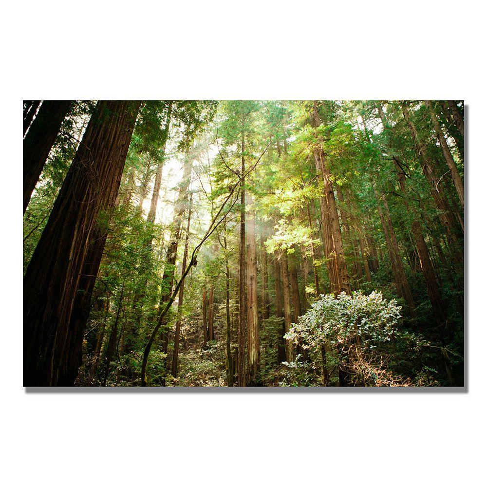 32'' x 22'' ''Muir Woods'' Canvas Wall Art