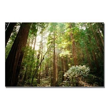 32'' x 22'' ''Muir Woods'' Canvas Wall Art
