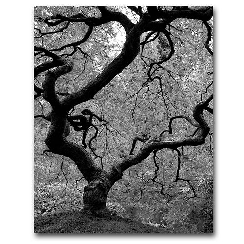 18'' x 24'' ''Japanese Tree II'' Canvas Wall Art