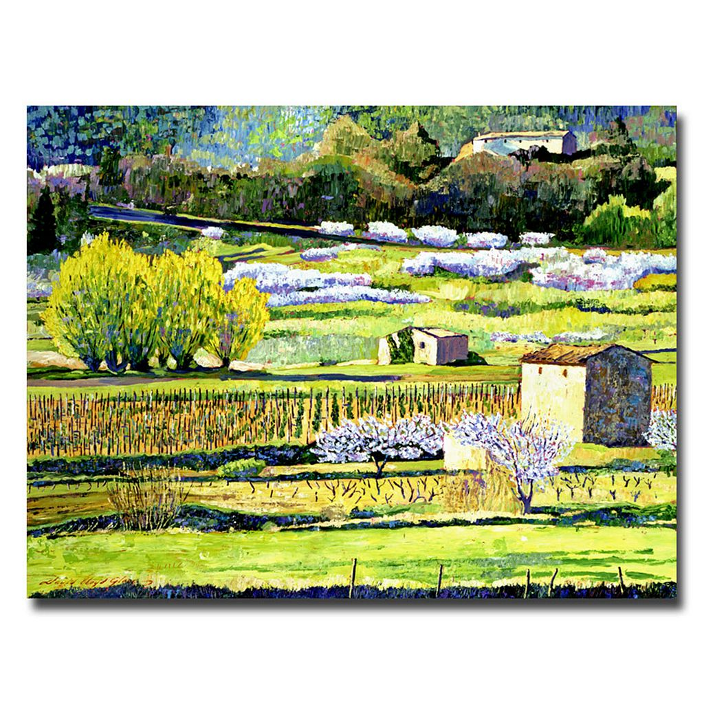 26'' x 32'' ''Bordeaux Vineyards in Spring'' Canvas Wall Art by David Lloyd Glover
