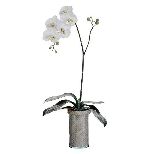 33-in. Artificial Phalaenopsis Plant