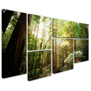 """Muir Woods"" 6-piece Canvas Wall Art Set"
