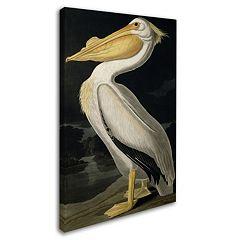 'American White Pelican' Canvas Wall Art
