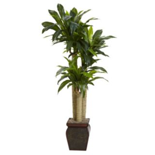 nearly natural Cornstalk Dracaena Plant