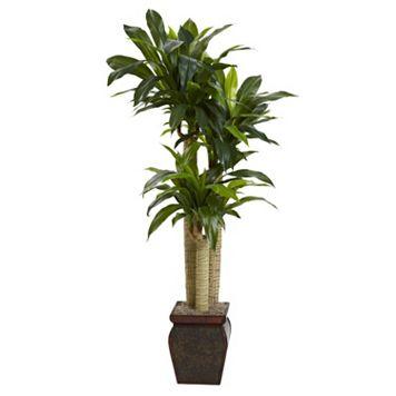 nearly natural Cornstalk Dracaena Plant
