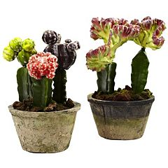 nearly natural 2 pc Colorful Cactus Gardens Set