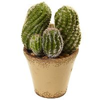 nearly natural Cactus Garden Ceramic Planter