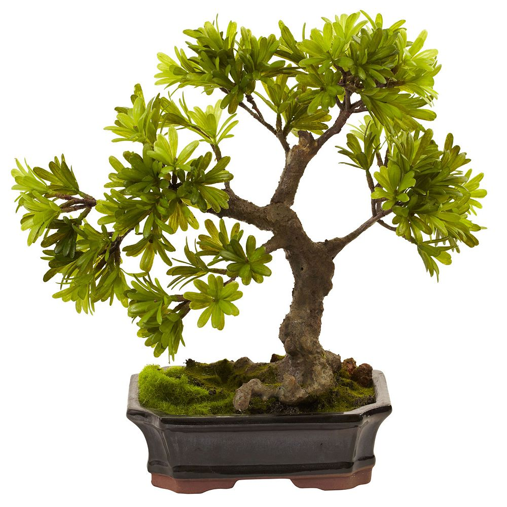 nearly natural Podocarpus Mossed Bonsai Planter