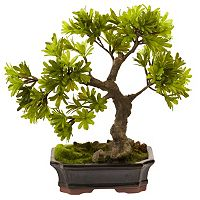 nearly natural Podocarpus Mossed Bonsai Planter