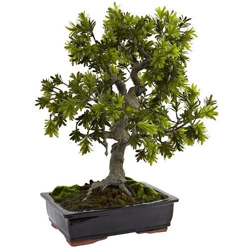 nearly natural Giant Podocarpus Mossed Bonsai Planter