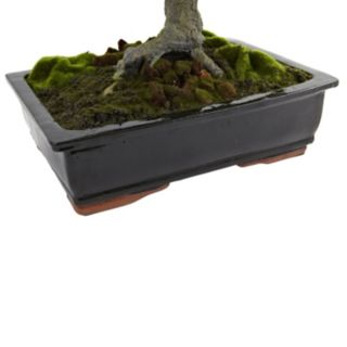 nearly natural Giant Podocarpus Mossed Bonsai Planter